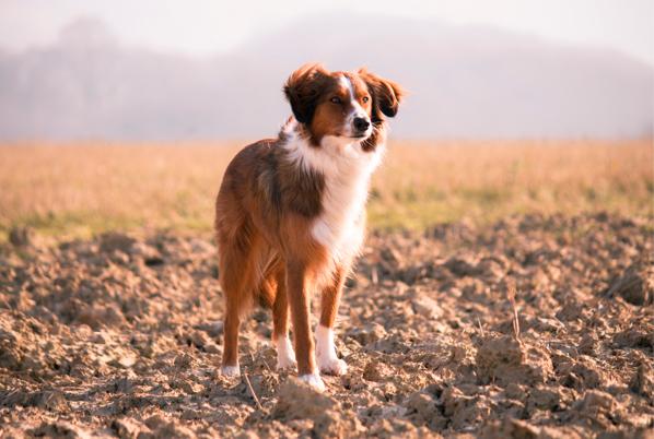 hundefutter auf rechnung bestellen uebersicht der top shops